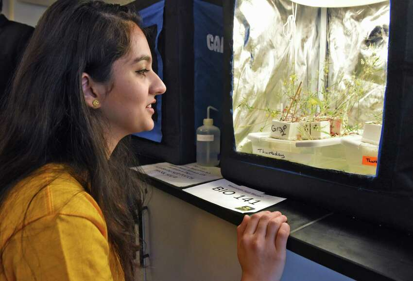 Science major Kanita Ahmed of Glenville explains a genetics experiment in a lab greenhouse during the opening of Schenectady County Community College's new biotechnology laboratory and research facility Wednesday March 22, 2017 in Schenectady, NY. (John Carl D'Annibale / Times Union)