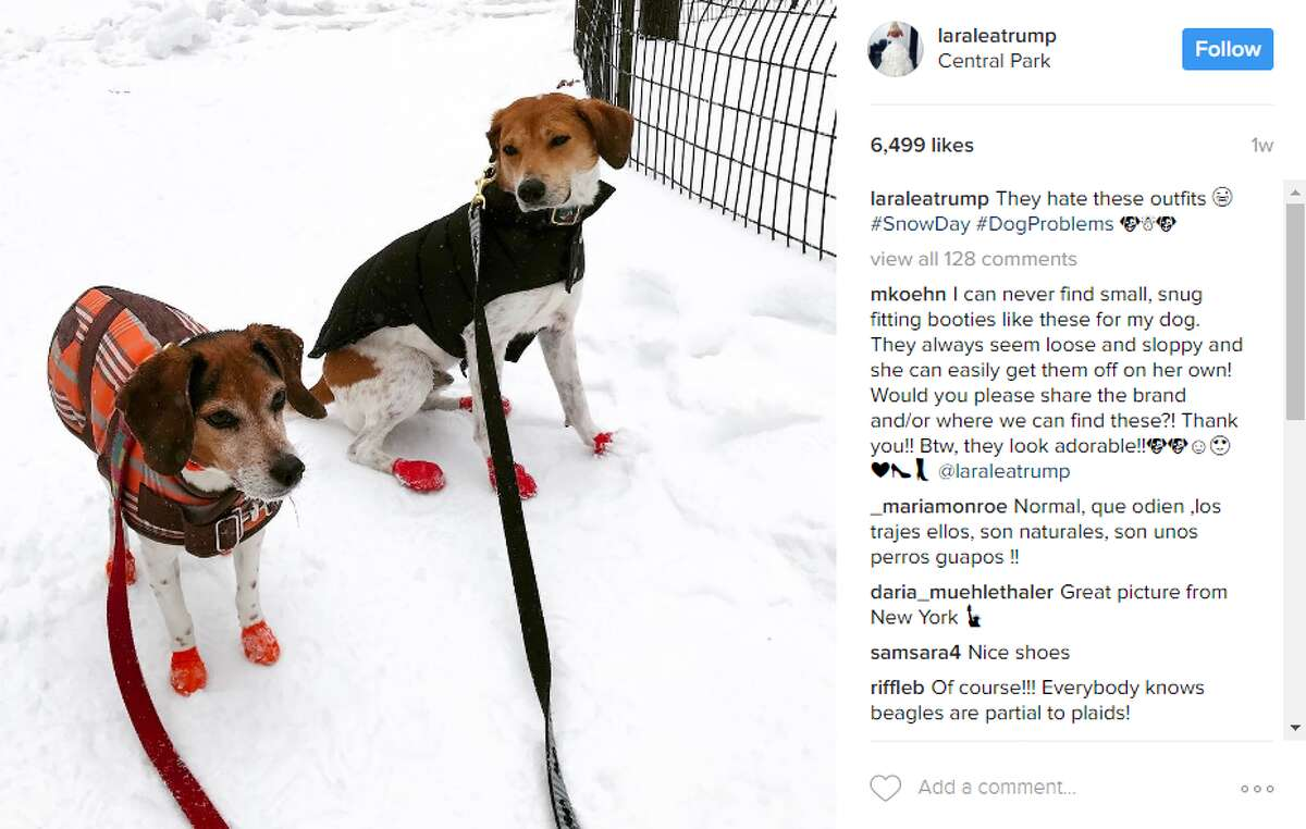 laraleatrump: They hate these outfits #SnowDay #DogProblems