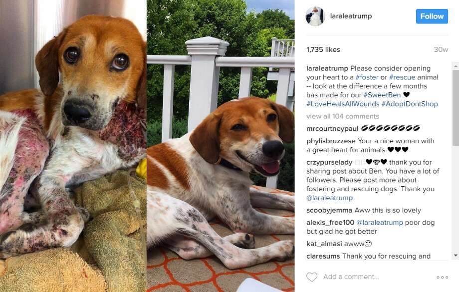 laraleatrump: Please consider opening your heart to a #foster or #rescue animal -- look at the difference a few months has made for our #SweetBen #LoveHealsAllWounds #AdoptDontShop Photo: Instagram
