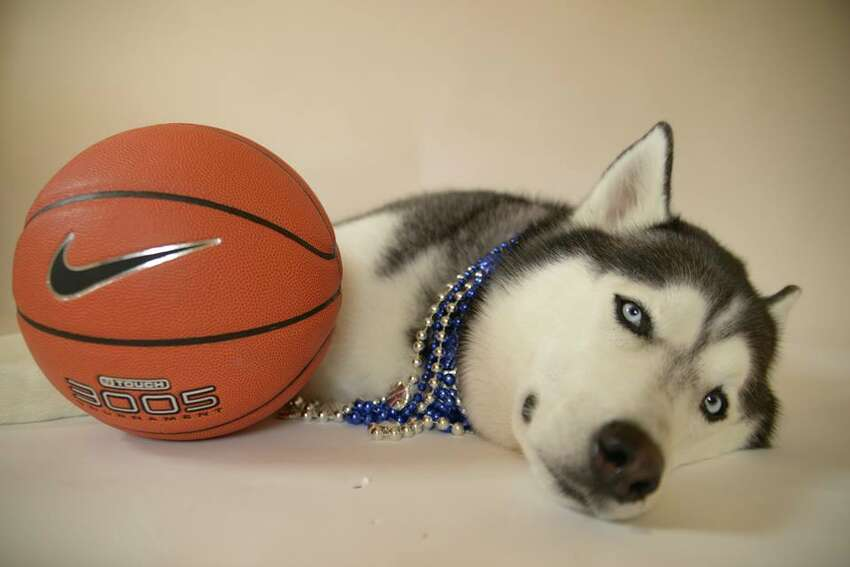 UConn's mascot, Jonathan XIV. Photo courtesy of the Jonathan the Husky Facebook page.