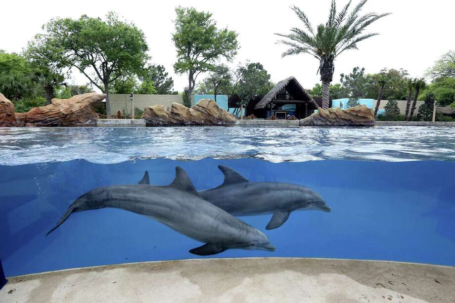 SeaWorld Entertainment shares jumped by more than 16 percent Monday after the company reported second-quarter increases in profit and attendance. Photo: William Luther /Staff File Photo / © 2017 San Antonio Express-News