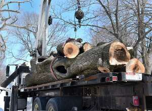 Workers from Davey tree service load a large tree, which they cut, onto the flat bed of a crane truck in Washington Park on Thursday, March 23, 2017 in Albany, N.Y. The tree service was removing rotting trees that were deemed dangerous to the public. ( Lori Van Buren / Times Union)