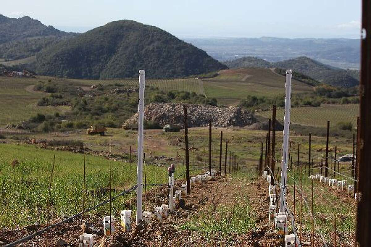 New vines planted in 2012 at Stagecoach Vineyard.