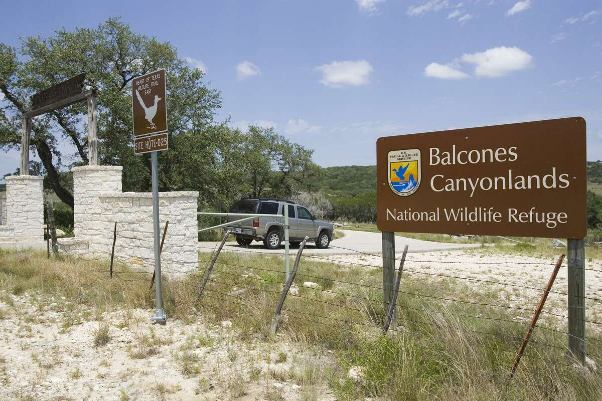 Balcones Canyonlands National Wildlife Refuge, northwest of Austin, offers extraordinary visitas and a chance to see two of the rarest birds in North America.