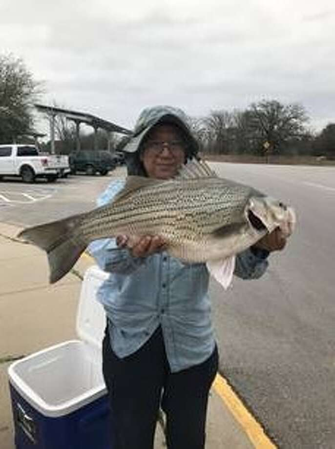 Irving Man Catches Record Setting Hybrid Striped Bass Houston Chronicle