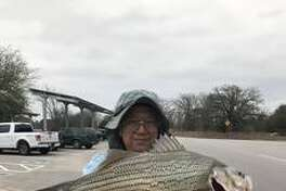 Yue Jiang Li caught a record-setting 9.83 pound, 25 inch long hybrid stripped bass in Ray Roberts Lake, just north of Denton in early March of 2017.