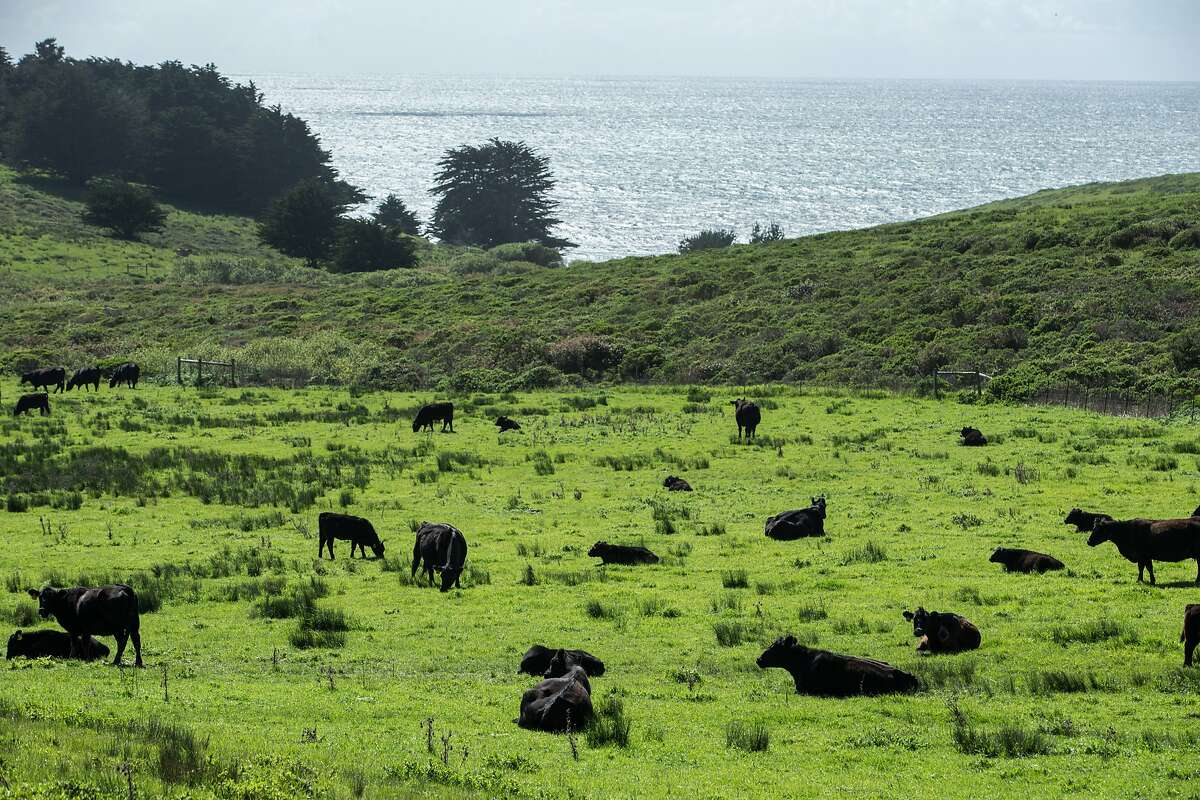Bill Niman's cattle ranch on Wednesday, March 22, 2017, in Bolinas, Calif. Niman, founder of Niman Ranch, has sold his grass-fed beef company, BN Ranch, to meal kit delivery company Blue Apron. Niman will retain the title of president and founder of BN Ranch within Blue Apron.