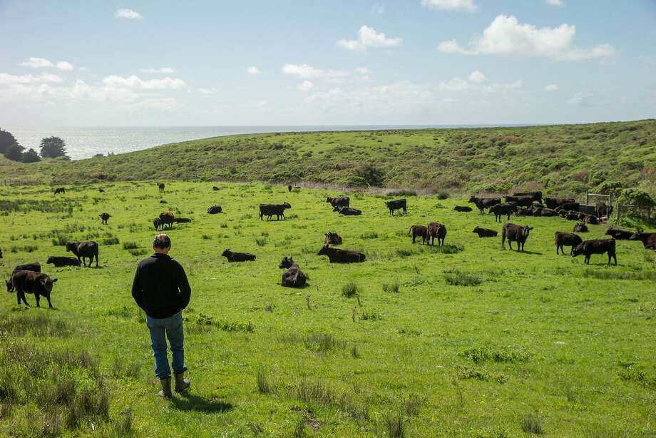 Bill Niman at his cattle ranch on Wednesday, March 22, 2017, in Bolinas, Calif. Niman, founder of Niman Ranch, has sold his grass-fed beef company, BN Ranch, to meal-kit delivery company Blue Apron. Niman will retain the title of president and founder of BN Ranch within Blue Apron. Photo: Santiago Mejia, The Chronicle