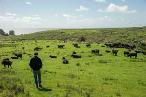 Bill Niman at his cattle ranch on Wednesday, March 22, 2017, in Bolinas, Calif. Niman, founder of Niman Ranch, has sold his grass-fed beef company, BN Ranch, to meal kit delivery company Blue Apron. Niman will retain the title of president and founder of BN Ranch within Blue Apron.