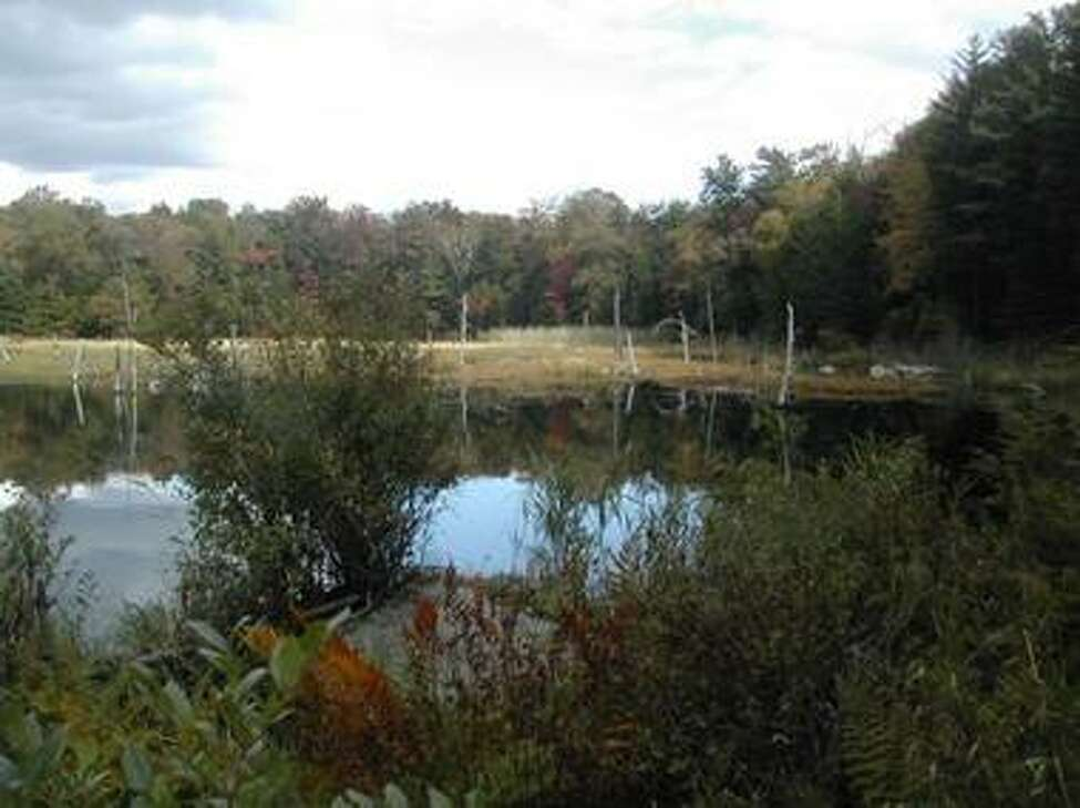 A photo of the Capital District Wildlife Management Area from the DEC. The Capital District WMA has been targeted by the Young Forest Initiative.