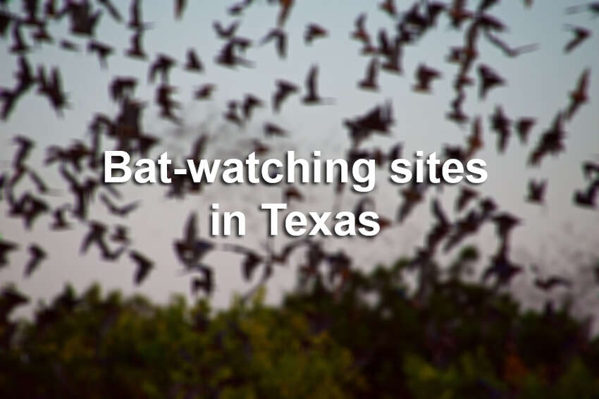 Keep scrolling to the Texas sites where you can go bat-watching.