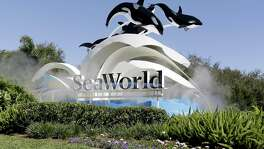 SeaWorld announced Friday that Zhonghong Zhuoye Group Co., a Chinese leisure and tourism holding company, has acquired a 21 percent stake from Blackstone Group at $23 per share.