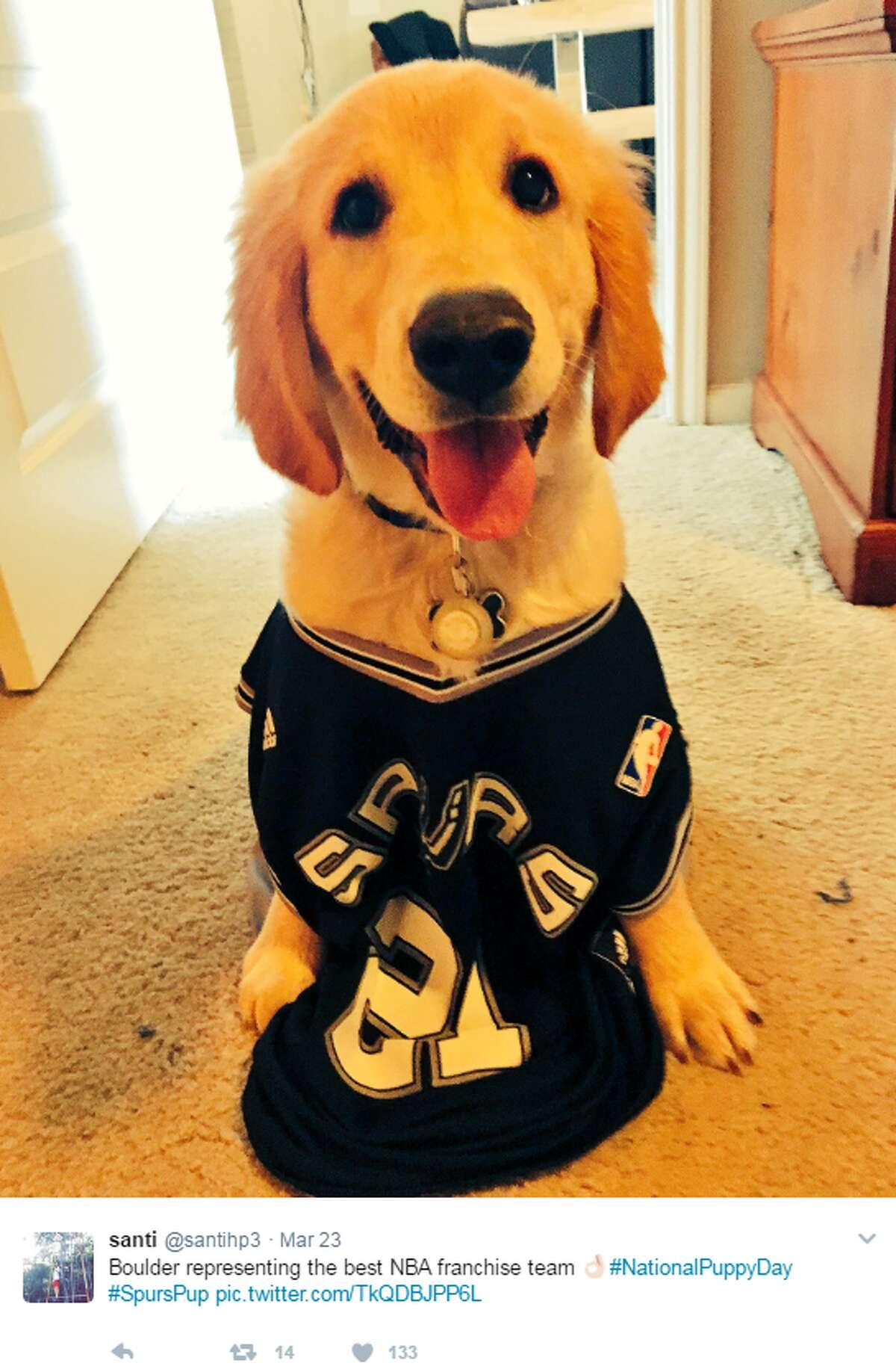 @santihp3: Boulder representing the best NBA franchise team #NationalPuppyDay