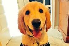 @santihp3:  Boulder representing the best NBA franchise team #NationalPuppyDay