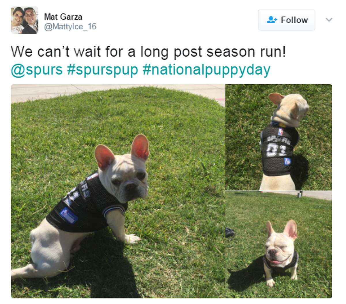 @MattyIce_16: We can't wait for a long post season run! @spurs #spurspup #nationalpuppyday