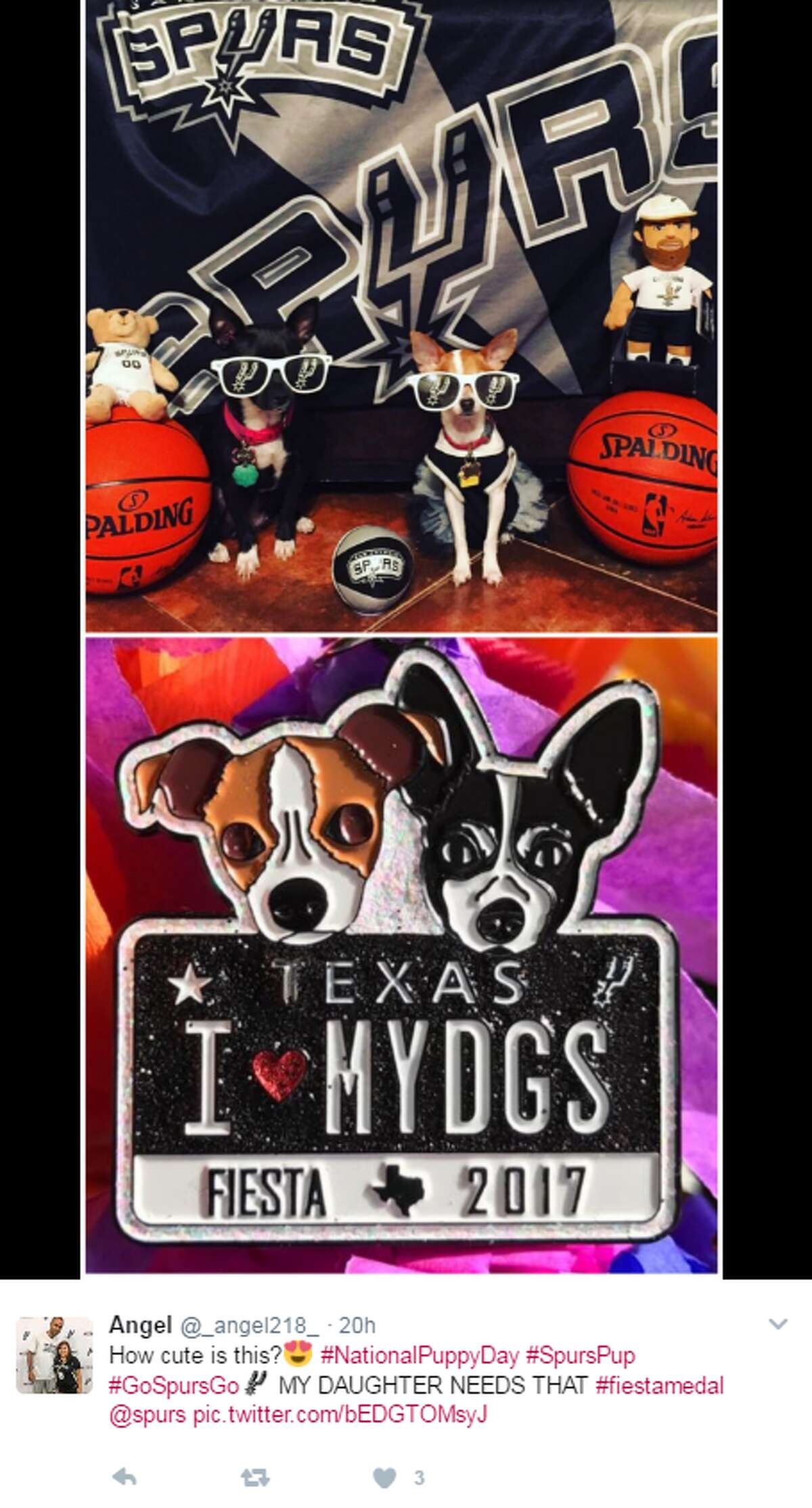 @_angel218_: How cute is this? #NationalPuppyDay #SpursPup #GoSpursGo MY DAUGHTER NEEDS THAT #fiestamedal @spurs