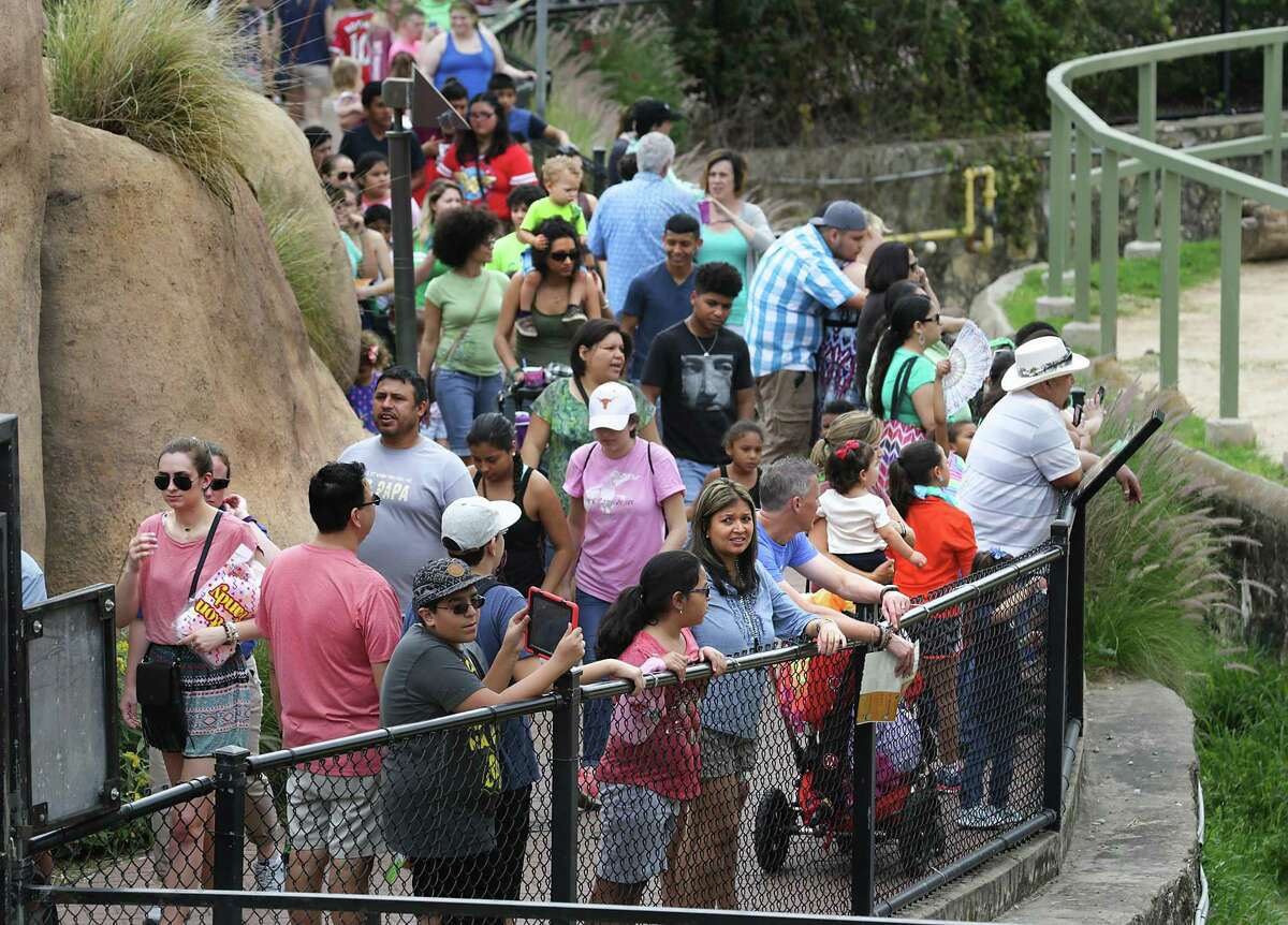 Crowds line up around the Elephants exhibit at The San Antonio Zoo, which is drawing large crowds over Spring Break. Thursday, March 17, 2016.