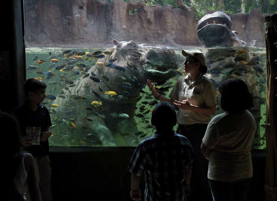 San Antonio Zoo animal care specialist Angela Garza (center) talks with visitors about hippopotami Tumbo (left) and Uma, during a feeding, Monday June 13, 2016 at the zoo. Photo: Edward A. Ornelas, Staff / San Antonio Express-News / © 2016 San Antonio Express-News