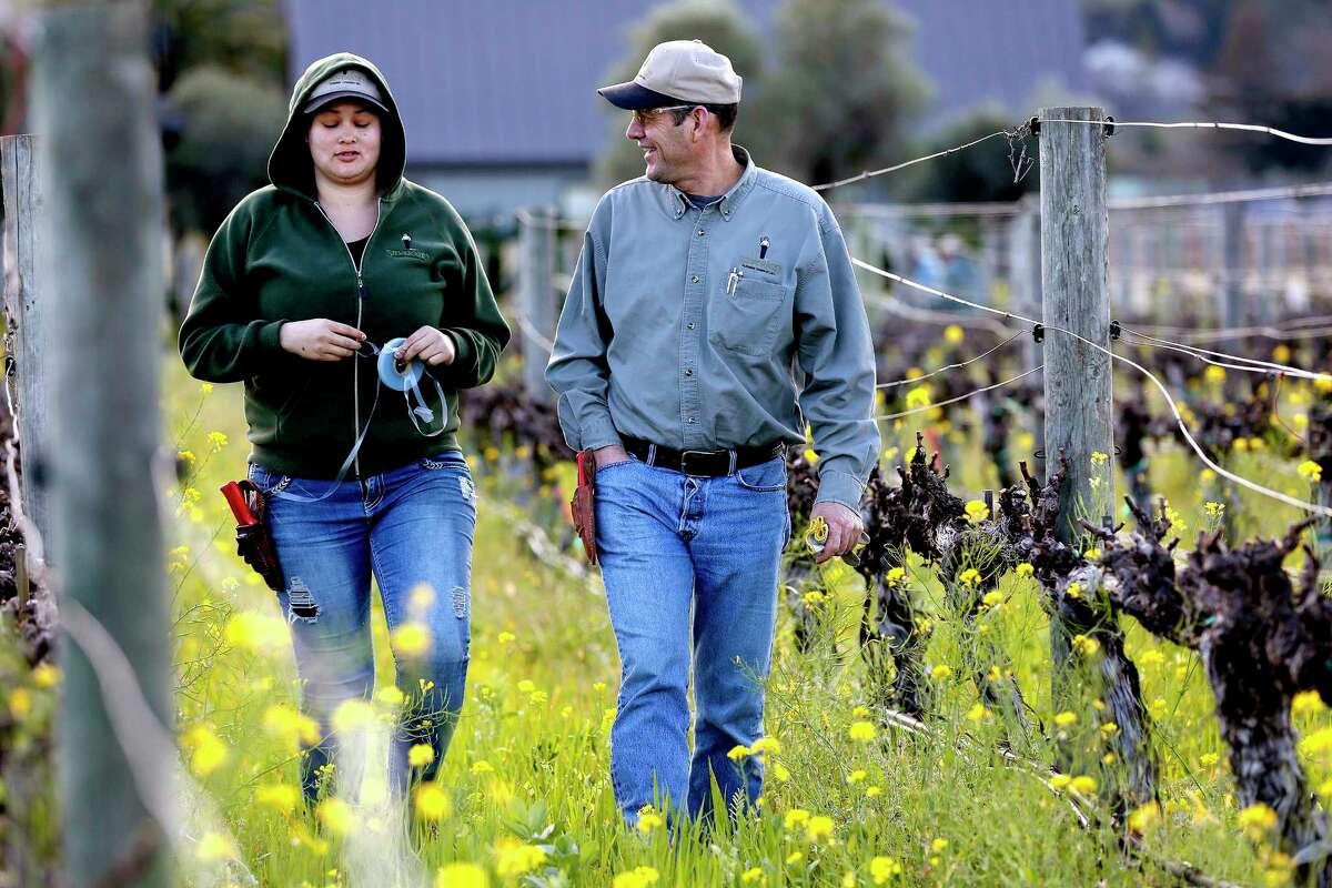 Cecilia Avina, 24, left, shown with Arnulfo Solorio, manager of Silverado Farming, after pruning wine grape vineyards in California's Napa Valley last month. (Gary Coronado/Los Angeles Times)