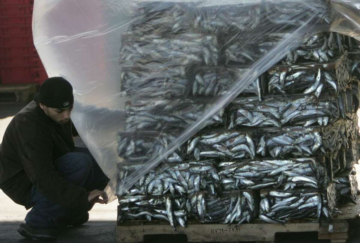 Worker wraps stacks of frozen blocks of sardines at Tri?-Marine International, a business which collects, freezes and ships fish, on Cannery Street on Terminal Island on 12/07/2006. The fish are frozen into blocks, refrigerated and shipped over seas for processing. (Photo by Bob Chamberlin/Los Angeles Times via Getty Images)
