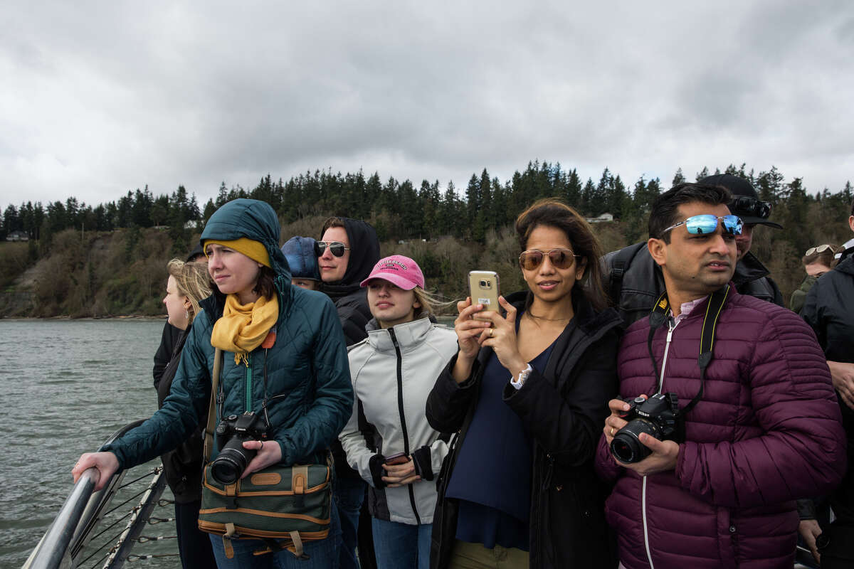Spectators aboard the San Juan Clipper stand watch for a gray whale.