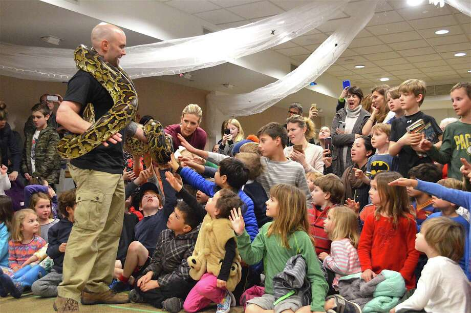 Percy, the Burmese python, weighs 90 pounds, according to Brian Kleinman, owner and operator of Riverside Reptiles, who paid a visit to the New Canaan Library on Saturday, Mar. 25, 2017, with his critters, in New Canaan, Conn. Photo: Jarret Liotta / For Hearst Connecticut Media / New Canaan News Freelance