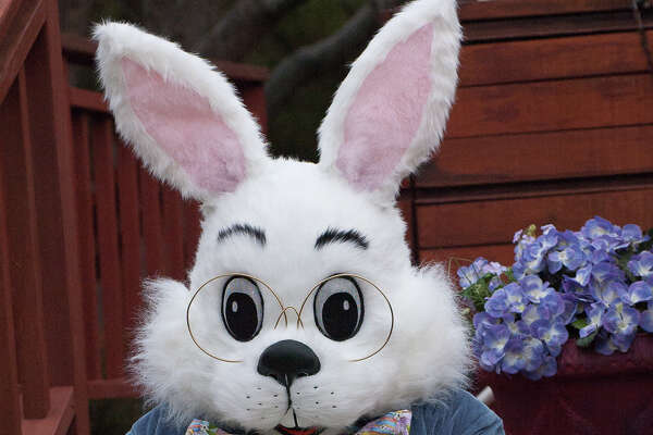 Families are invited to enjoy the Easter Bunny Photo Experience at Katy Mills.