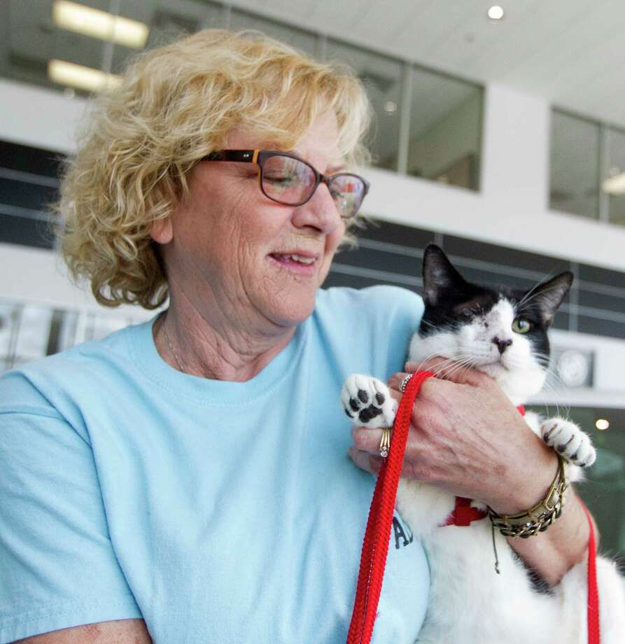Mary Williams holds a cat before a check presentation where from Don Wiesner and his daughter Falon Wiesner-Jones with Wiesner Buick GMC presented a $10,000 check to the Animal Shelter Volunteers of Texas on Wedensday, March 22, 2017, in Conroe. Photo: Jason Fochtman, Staff Photographer / © 2017 Houston Chronicle