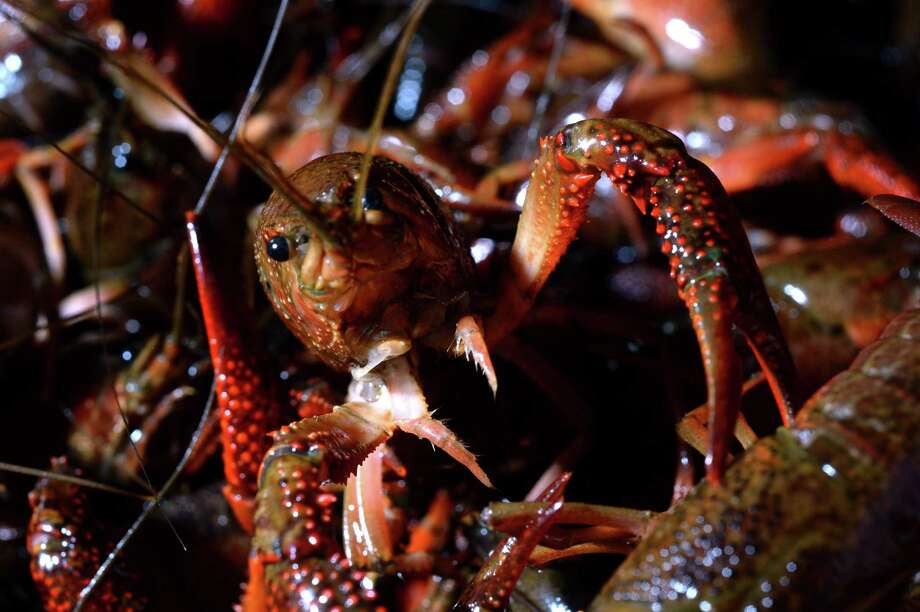 The Hut in OrangeThe Hut will sell crawfish tomorrow starting at 4 p.m. until they're gone.Price: $6.99 per pound.Three pounds comes with one corn and one potato and five pounds comes with two corn and two potatoes.Where:1804 N. 16th St., Orange Photo: Guiseppe Barranco, Photo Editor