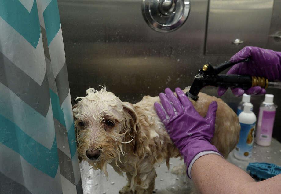 Dog Grooming Port Sydney