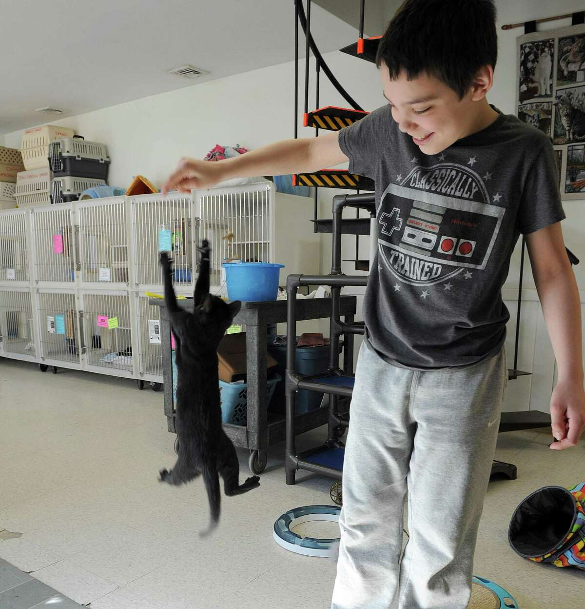 Tyler Grace, 11, plays with a kitten at Danbury Animal Welfare, Monday, March 6, 2017. Fairfield County Giving Day is Thursday, March 9 and the Danbury Animal Welfare Society is one of the participants.