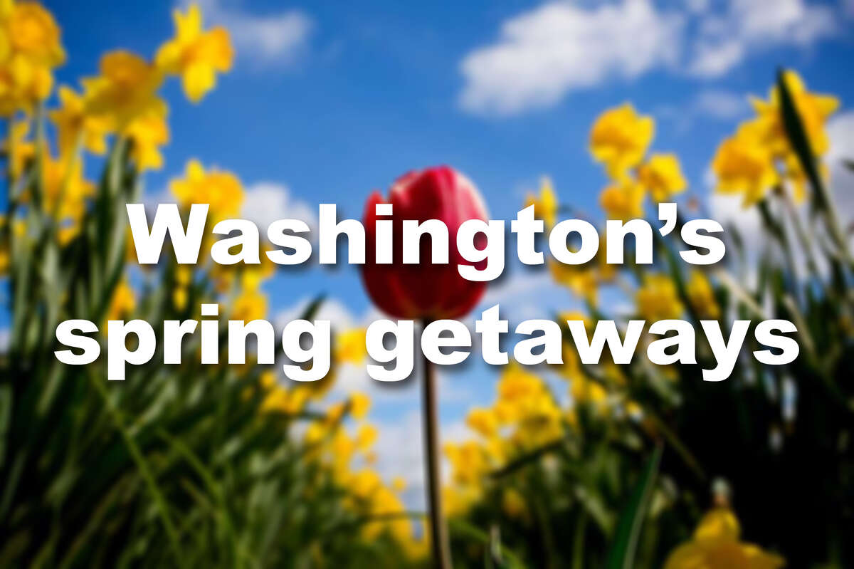 What can you do in Washington when it's still drizzly but the sun peaks out with intermittent rays of hope? Here are a few ideas.