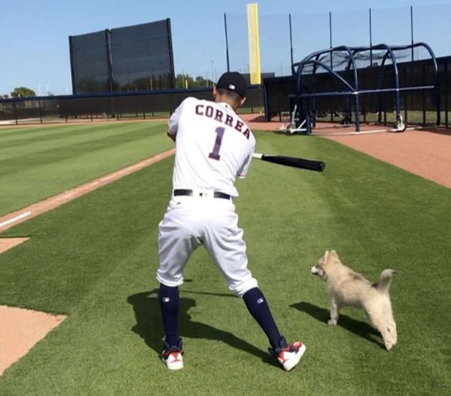 Carlos Correa hit ground balls for his puppy to fetch at the Astros' spring training complex in West Palm Beach, Fla. Photo: Instagram