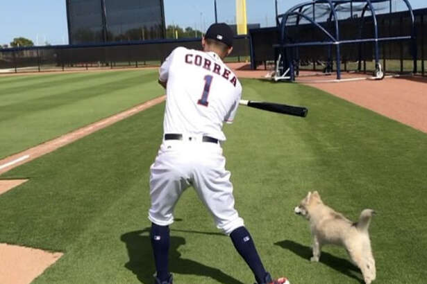 Carlos Correa hit ground balls for his puppy to fetch at the Astros' spring training complex in West Palm Beach, Fla.