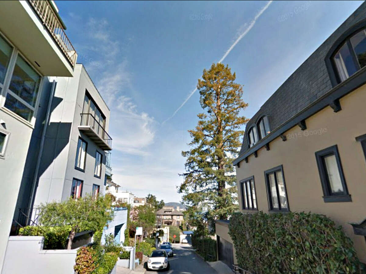 It looks like this Russian Hill redwood tree will get to grow a little taller.