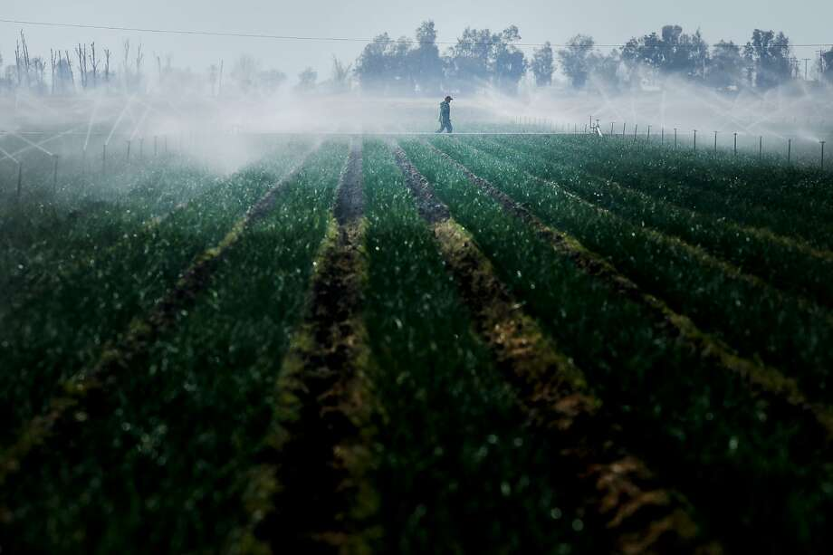 A worker checks the sprinklers of an onion farm in Bakersfield. Photo: Santiago Mejia, The Chronicle