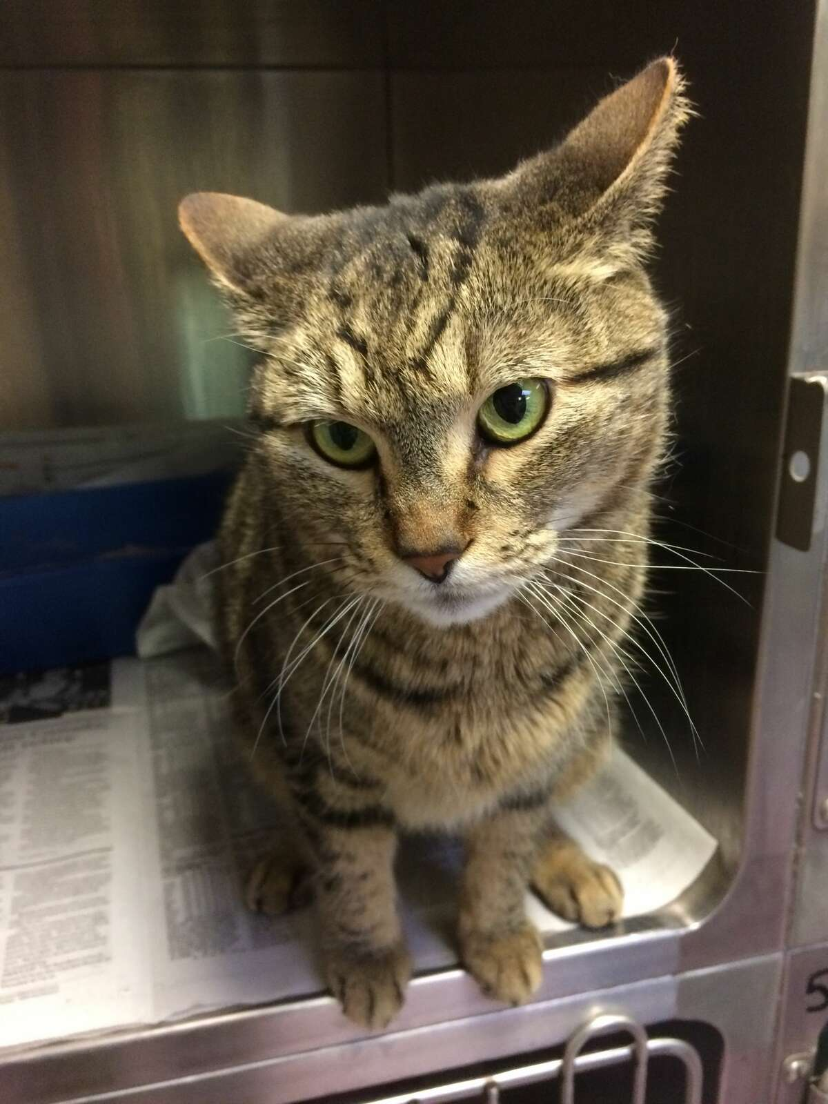 BooBoo the cat disappeared from Watsonville, Calif. in August 2014. She showed up almost four years later in southwestern Ontario, Canada.