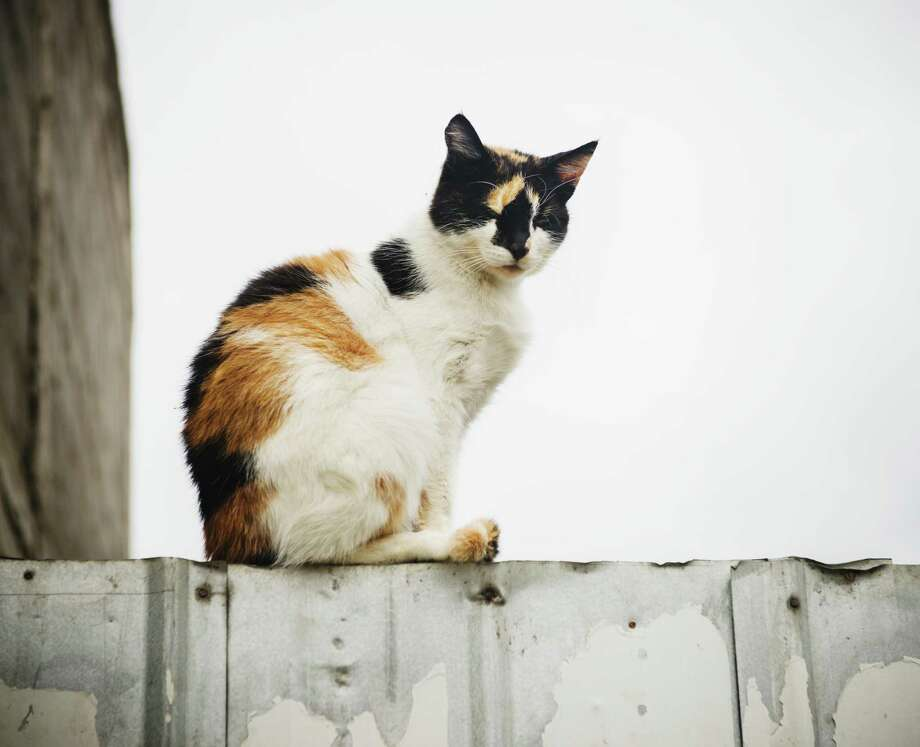 Two retired school teachers have been feeding and providing trap-neuter-return for hundreds of cats in San Antonio for several decades. Photo: Michael Marquand /Getty Images / Lonely Planet Images / Michael Marquand