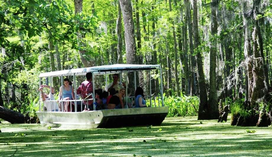 A swamp tour lets visitors to Louisiana's North Shore get close to nature. Photo: Courtesy Louisiana North Shore Tourism