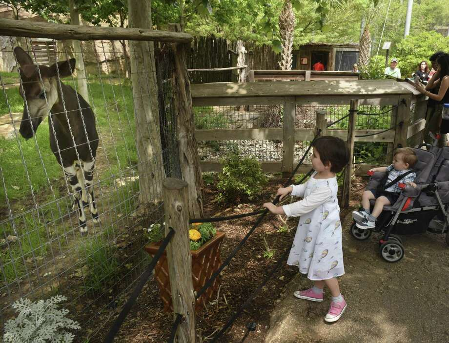 San Antonio Zoo cutting admission cost for locals Tuesday - San ...