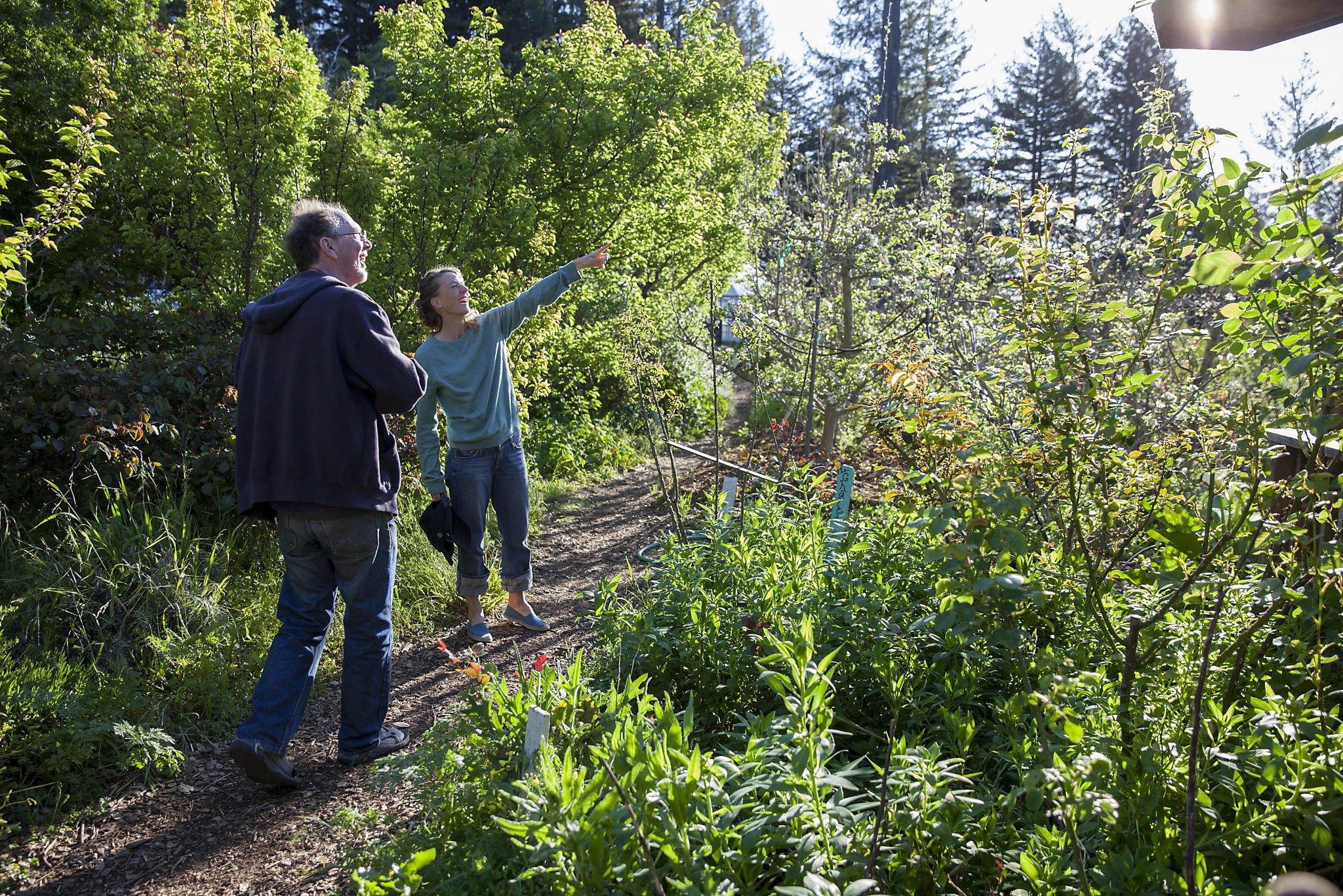 The Santa Cruz garden that launched a movement - SFGate