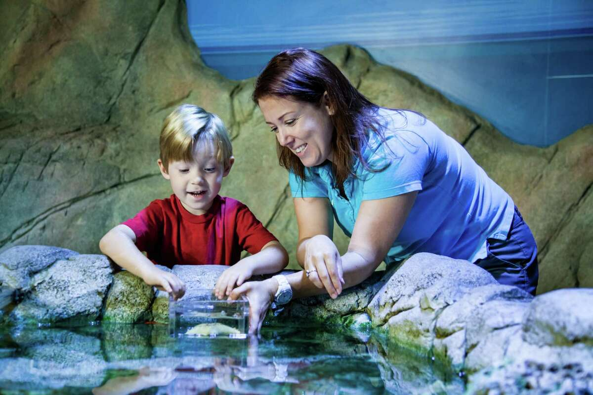 Houston-based Warwick Construction Inc. has sued Sea Life Center San Antonio LLC alleging the general contractor has not been paid almost $1 million for labor and materials on an aquarium project underway at the Shops at Rivercenter mall.
