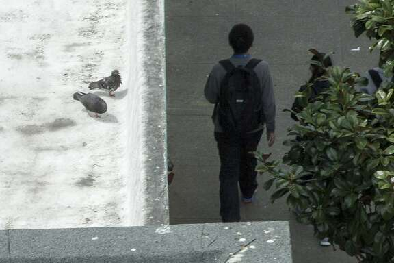 Pigeons are seen at a nearby rooftop near 6th and Howard streets on Wednesday, April 5, 2017, in San Francisco, Calif.