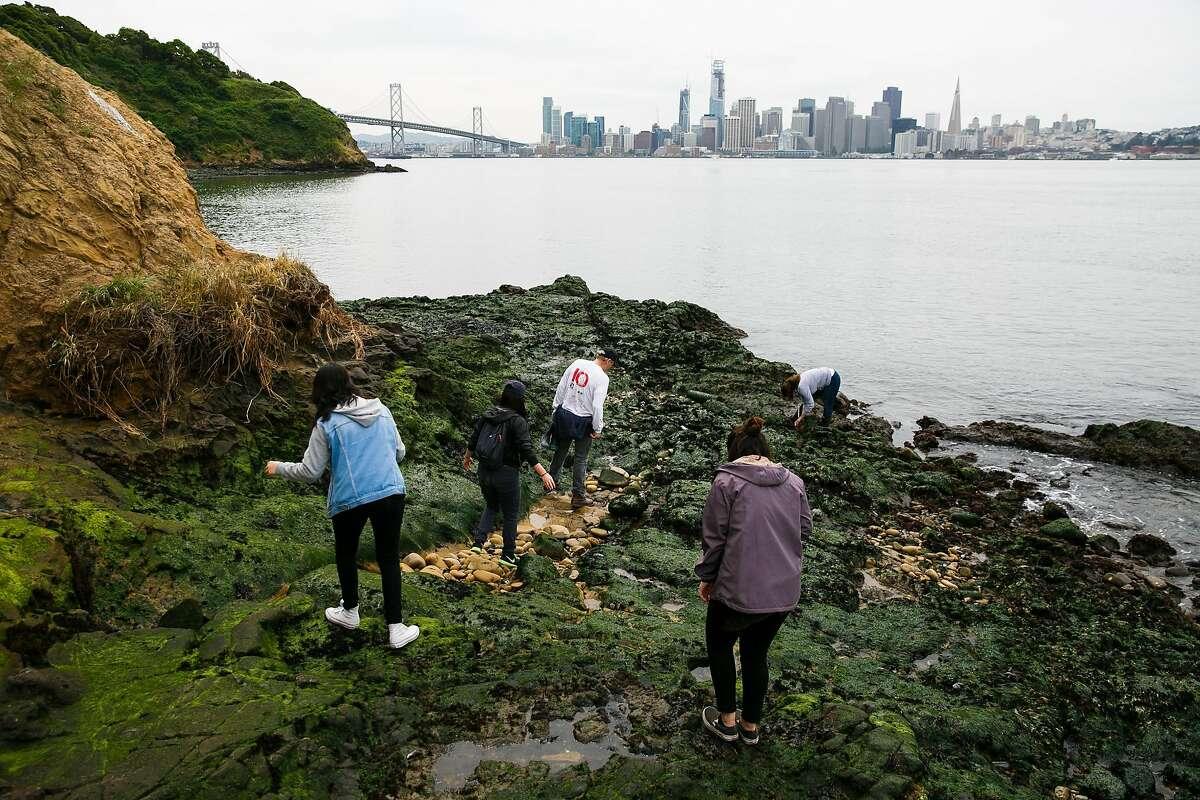 Yerba Buena Island Bioblitz group search for species on the coastal bluffs on Yerba Buena Island in San Francisco, Calif. Wednesday, April 5, 2017.