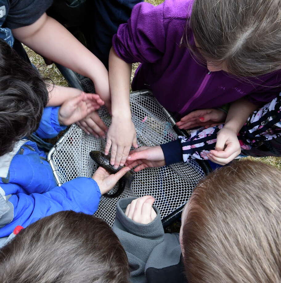 Second graders from Voorheesville Elementary School get a chance to touch a fish before they are let loose in the Vly Creek Wednesday April 5, 2017 in Voorheesville, N. Y.  Skip Dickstein/Times Union) Photo: SKIP DICKSTEIN, Albany Times Union / 20040106A
