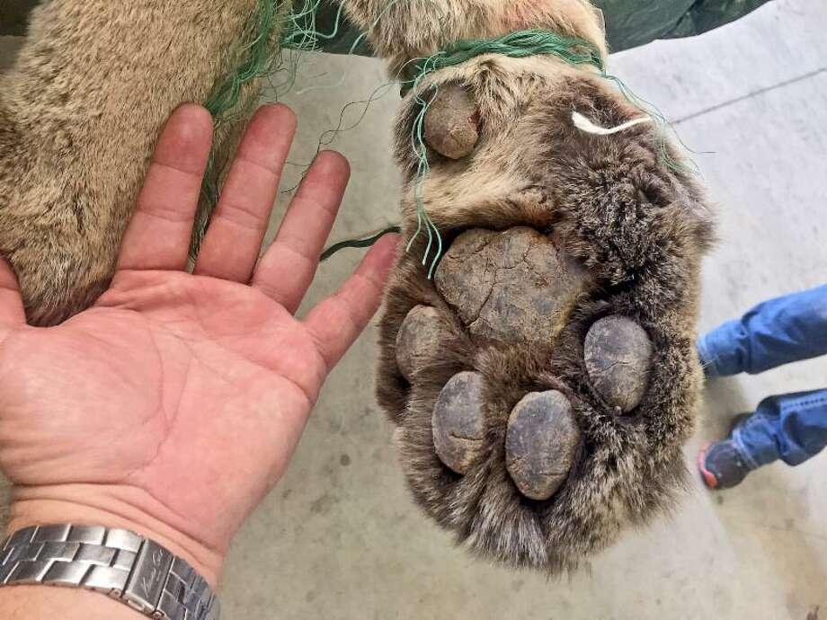 Wildlife jobs oklahoma