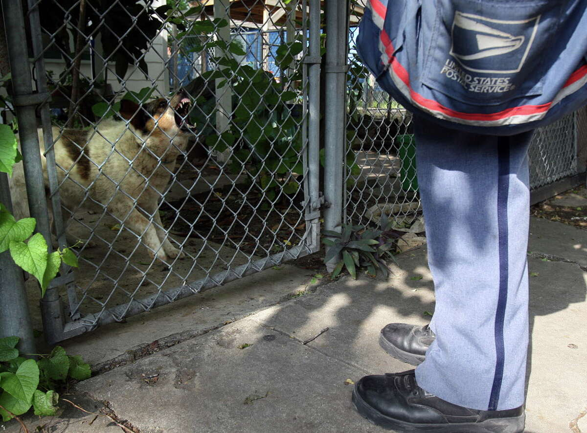 FILE: A dog snarls and barks at U.S. Postal Service letter carrier Albert J. Smith as he delivers mail on the West Side of San Antonio in 2007.