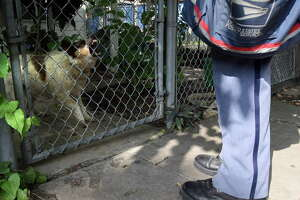 "A dog snarls and barks at U.S. Postal Service letter carrier Albert J. Smith as he delivers mail on the West Side of San Antonio in 2007. ""If he has teeth, he can bite,"" Smith said. JOHN DAVENPORT 