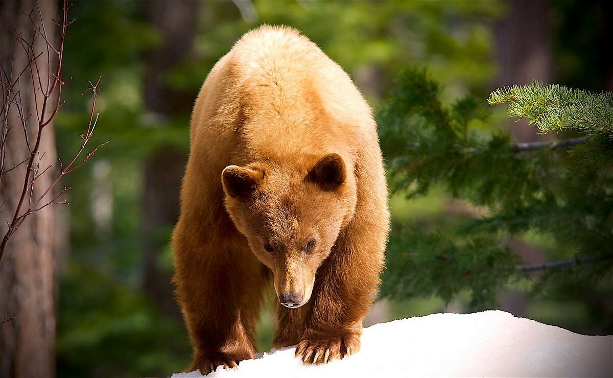 Spraying bear repellent at a human Two men were arrested in Southbury following a road rage incident that resulted in one spraying the other in the face with bear repellent. They told police a man had sprayed them with bear spray after one of them struck the side mirror of the other man's vehicle