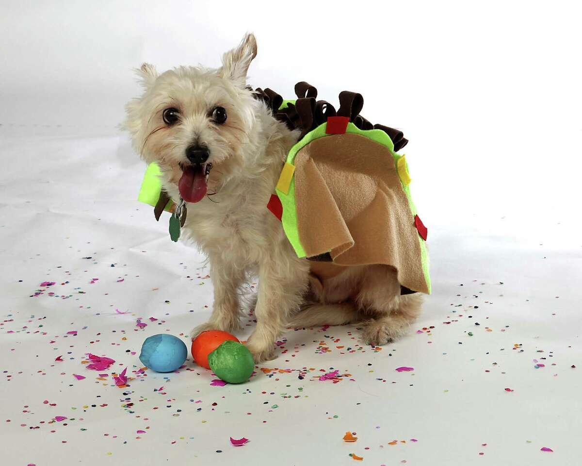 Doggy taco costume Click here for how to make it.